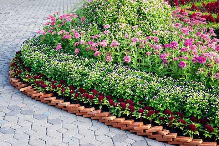 Когда цветы посадить на клумбе чтобы цвели все лето