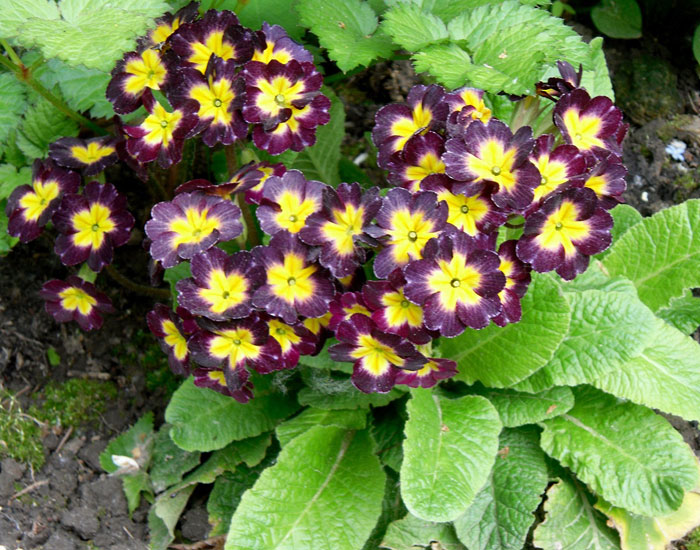 Уход за цветами в августе в саду