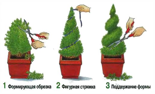 Как сделать кипарис