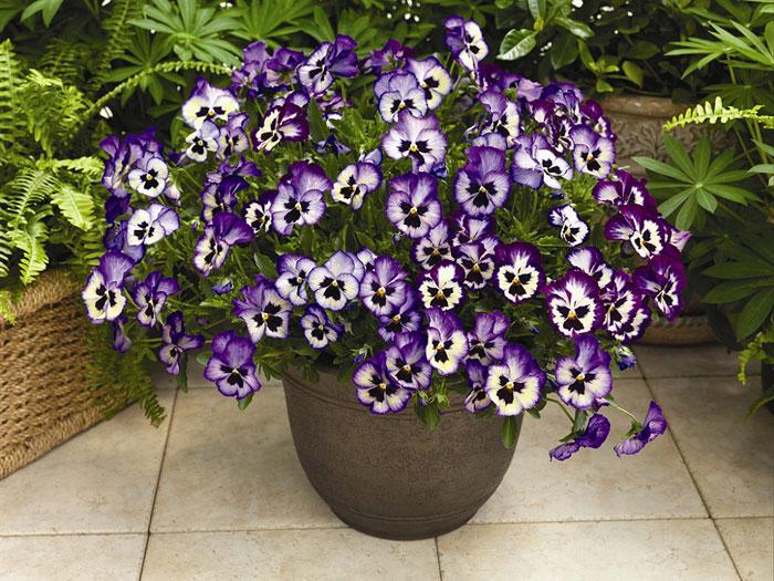 blüte lila blau knospe